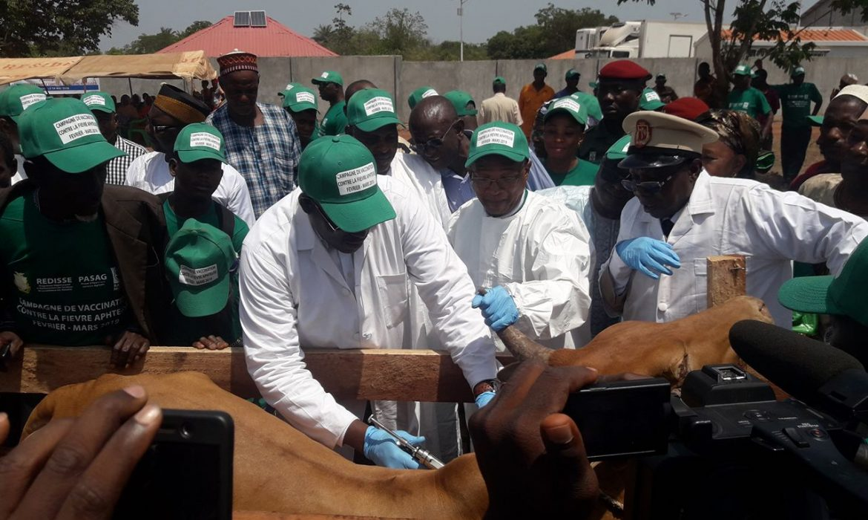 Santé Animale : Le ministère de l'élevage et ses partenaires lancent la Campagne Nationale   de   Lutte Contre la Fièvre Aphteuse