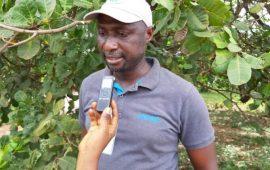 Kolaboui : l'État offre plus de 60 poteaux électriques pour l'électrification de la localité