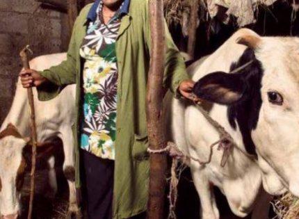 Sahel : 375 millions USD pour booster le pastoralisme